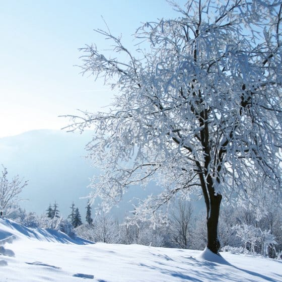 Sneeuwuil op zonne-energie