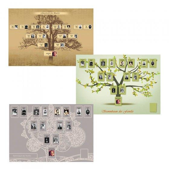 """DVD de recherche généalogique  """"L'arbre généalogique"""""""